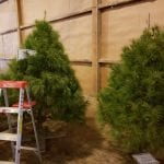 Ready to get started decorating trees